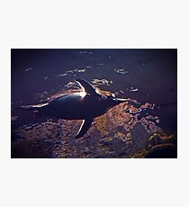 Penguin from Up High  Photographic Print