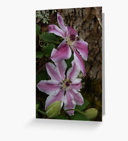 Unusual beauties.. Greeting Card