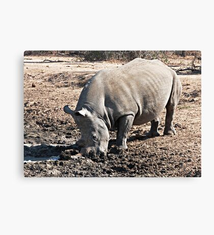 Who Called Me a Stick In the Mud? Canvas Print
