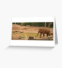 Playing chase Greeting Card