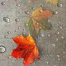 Autumn Leaf Dew by Zoe Marlowe