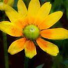 Yellow Petals!!! © by Dawn Becker