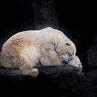 «Sleeping Polar Bear» de Tom Grieve