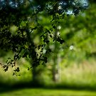 Green Summer -  Déjà vu . Brown Sugar Storybook .. Featured in Going Green. by © Andrzej Goszcz,M.D. Ph.D