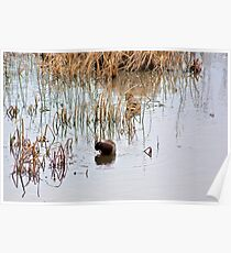 Amongst the Reeds Poster