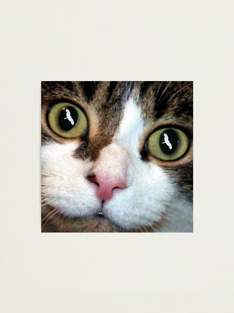 Alternate view of Cats Eyes Photographic Print
