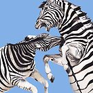 Zebra's Fighting Blue/Purple by Meaghan Roberts