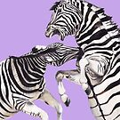 Zebra's Fighting Purple by Meaghan Roberts