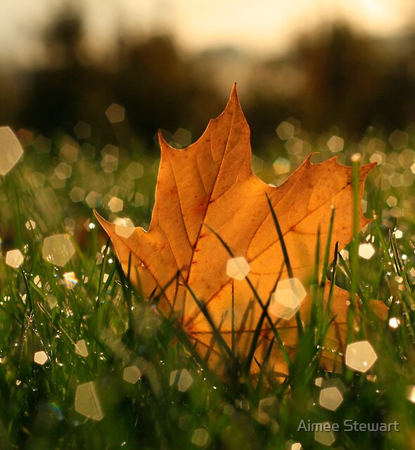 Autumn Jewels by Aimee Stewart