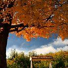 Autumn Swing by Aimee Stewart
