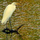 Another Egret Reflection by DottieDees