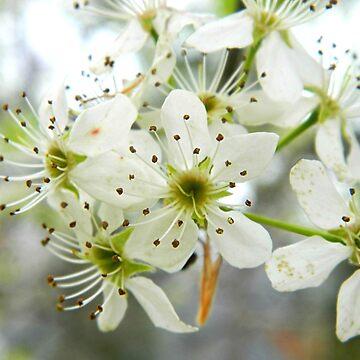Spring Flowers de CarboMcoco
