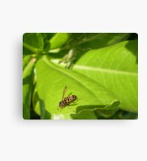 Fly insect Canvas Print