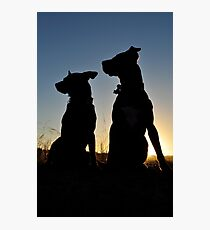 Rescue dogs rock Photographic Print