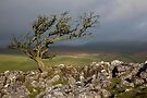 The Lichen Tree by SteveMG