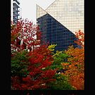 Urban Autumn 2 by Rebecca Jarboe