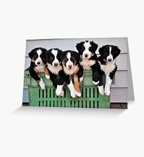 5 pups in a crate Greeting Card