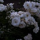 White Flowers in Spring by lillijy97