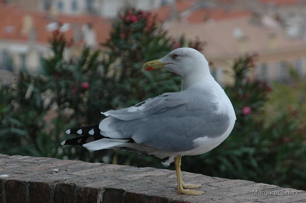 Gull in Cannes by Margaret  Shark