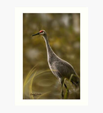 Heron or Sandhill...? Art Print