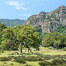 Malibu Creek State Park by Mariola Szeliga