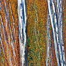 Autumn Ablaze. by Todd Rollins