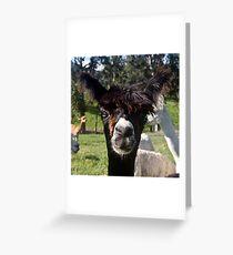 Alpaca 2 Greeting Card