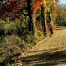 Autumn River Road by NatureGreeting Cards ©ccwri