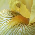 Mellow Yellow by Kath Whitchurch