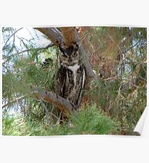 Great Horned Owl ~ Wild Poster