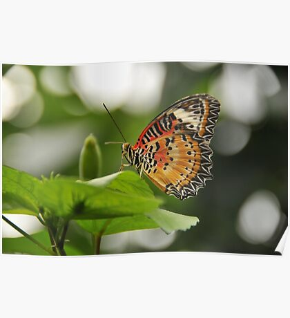 Leopard Lace Wing Poster