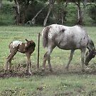 Newborn Tara by skyhorse