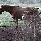 Cante & foal by skyhorse