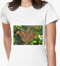 Atlas Moth Womens Fitted T-Shirt