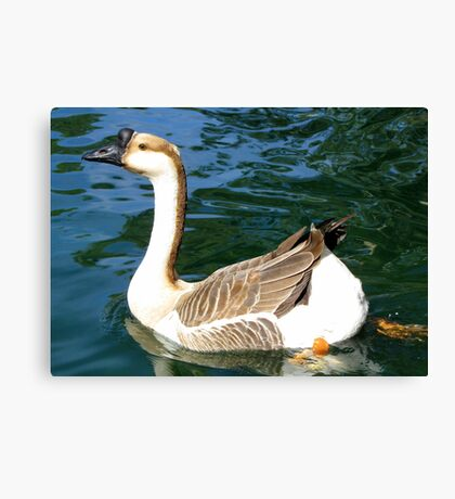 Chinese Goose ~ Male Canvas Print
