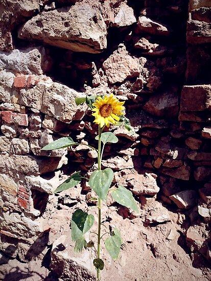 Sonnenblume vor Burg-Mauer