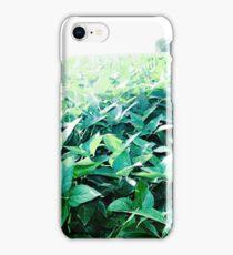 SOYBEAN FIELD iPhone Case/Skin