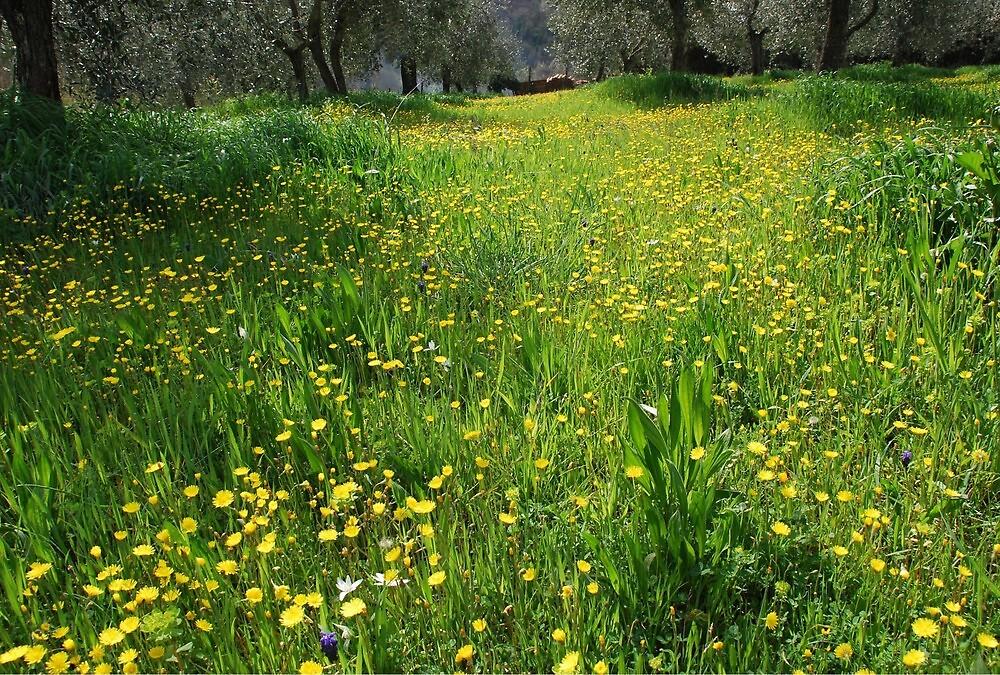 Springtime in Tuscany-Siena by Deborah Downes