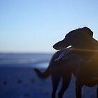 Shela at Sunset by Michael Haslam