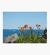Wild Lillies Photographic Print