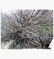 scary trees 1 Poster