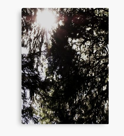 Sunlight in the Hoh Canvas Print
