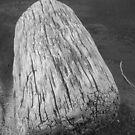 Log #1 by arawak
