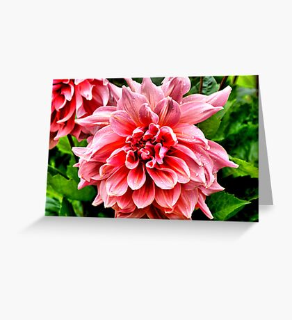 Wet Dahlia Greeting Card