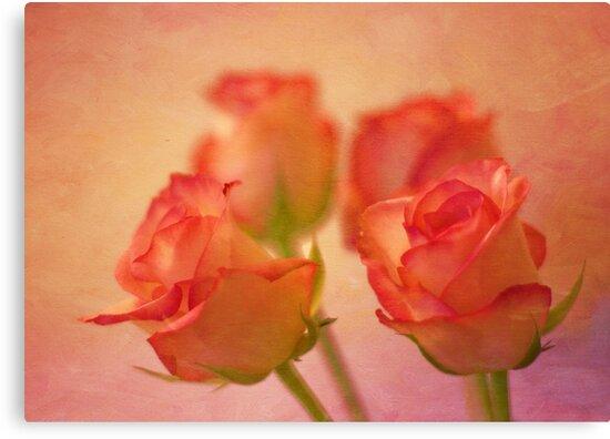 A bokeh of roses by inkedsandra