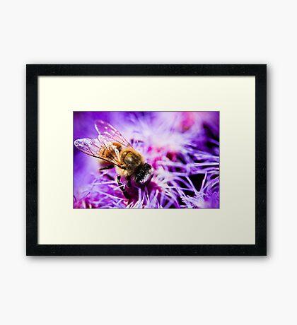 Fantastic Bee Framed Print