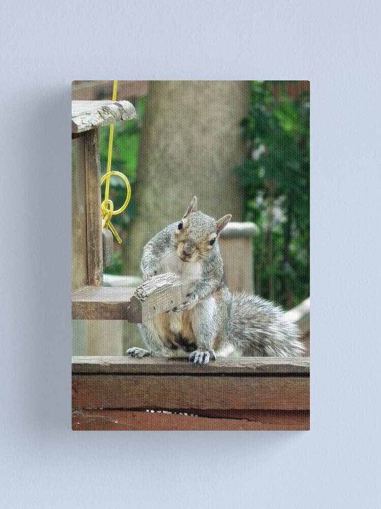 Alternate view of Squirrel 9 - have you seen my nuts? Canvas Print