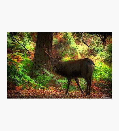 Deer Stalking Photographic Print