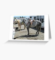 Grey horse Greeting Card