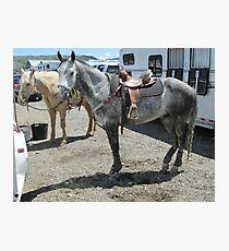 Grey horse Photographic Print